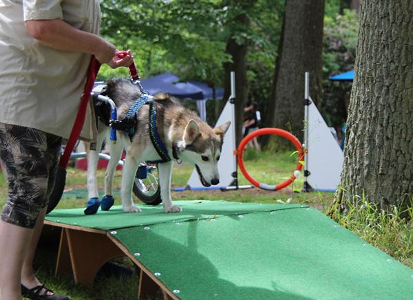 Paralympixx für Hunde
