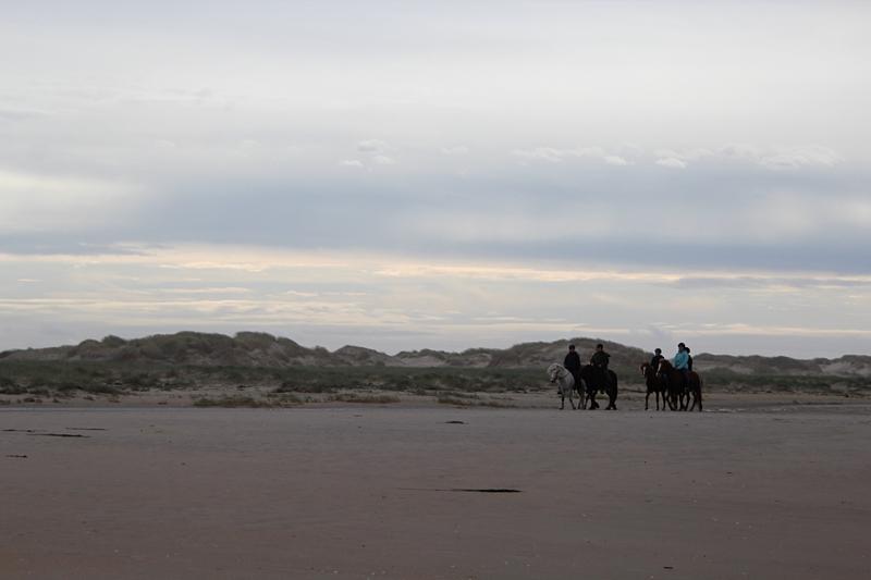 Mehr Strandbilder - Islandpferde