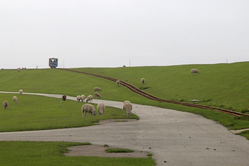 Schafe und Lore