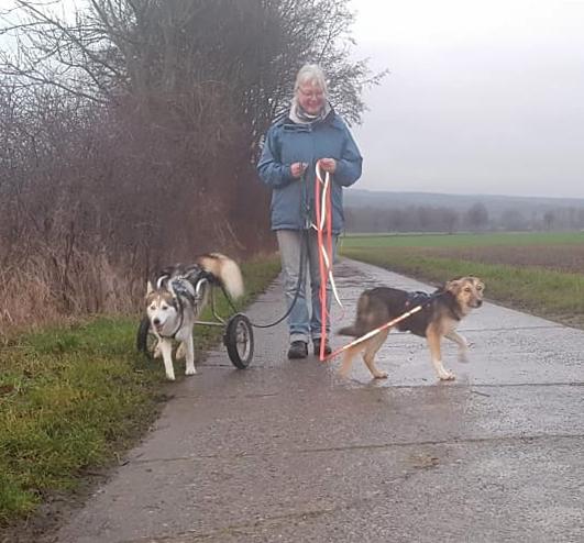 Zoltan, AdopTante, Henry